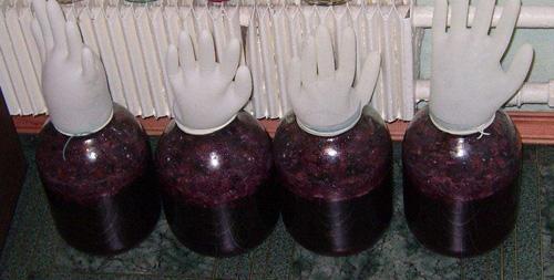 брожение вина под перчаткой