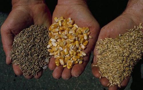подбор зерновых