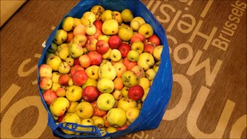 яблоки для вина