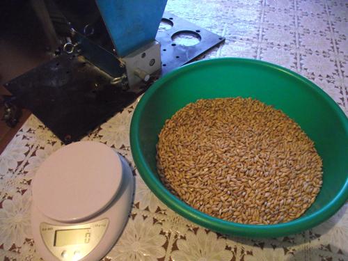 кашу кукурузу и пшеницу осахариваем ячменным солодом