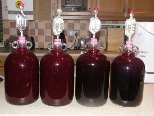 вино из черноплодки бродит в бутылях