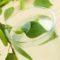 Как сделать брагу из березового сока в домашних условиях