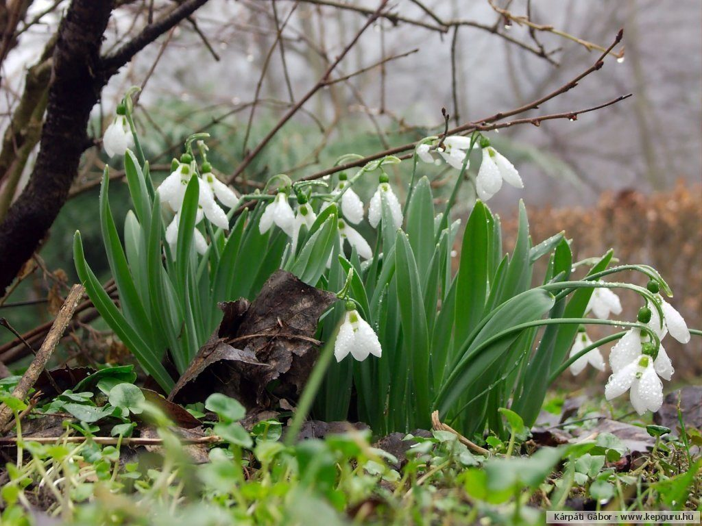 Народные поверья на 31 марта: почему в этот день лучше не стричься и не брать денег в долг