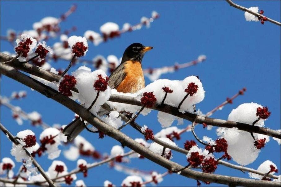 11 марта – Порфирий поздний, Птичий день: приметы и ритуалы на благополучие