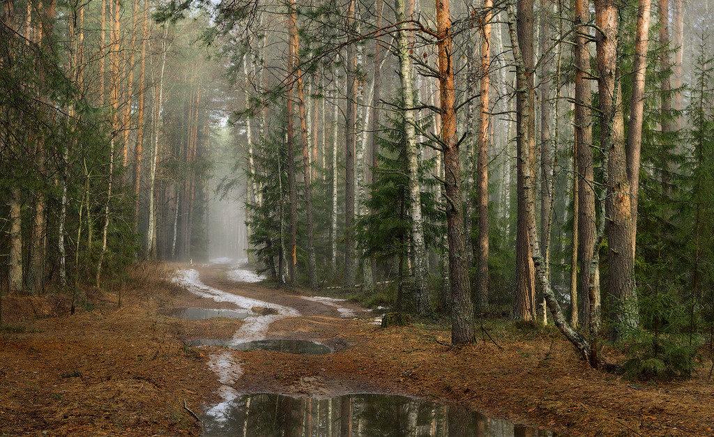 Приметы и поверья на 28 марта - день благодарности лесу и земле