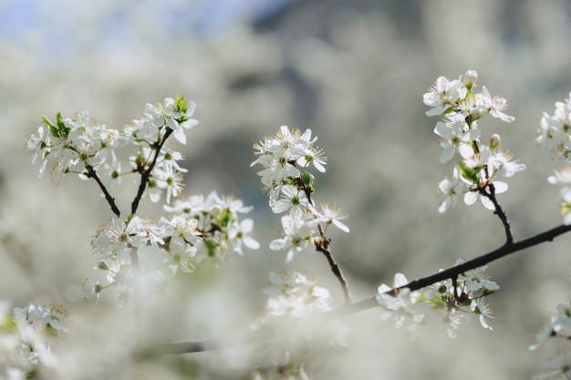 Народные традиции и обычаи на 19 апреля 2019: День Евтихия Тихого и Еремы Пролетного