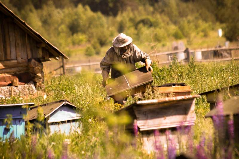 Почему 30 апреля называют днем Зосимы Пчельника и чем заняться, если у вас нет пчёл