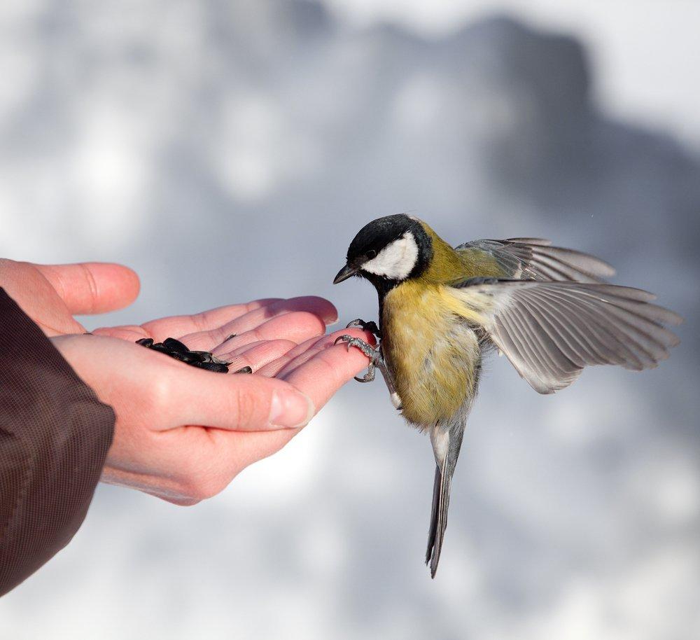 5 апреля - Никонов день: зачем в старину в этот день кормили птиц
