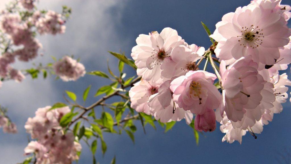 Традиции на 3 мая 2019 года на Федора Власяничника и почему в этот день окликали предков
