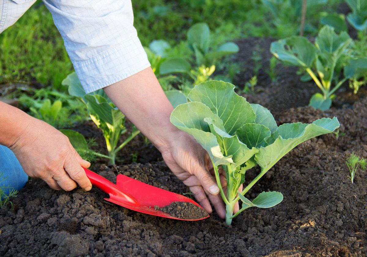 День Арины‑рассадницы 18 мая: как нужно высадить рассаду, чтобы получить хороший урожай