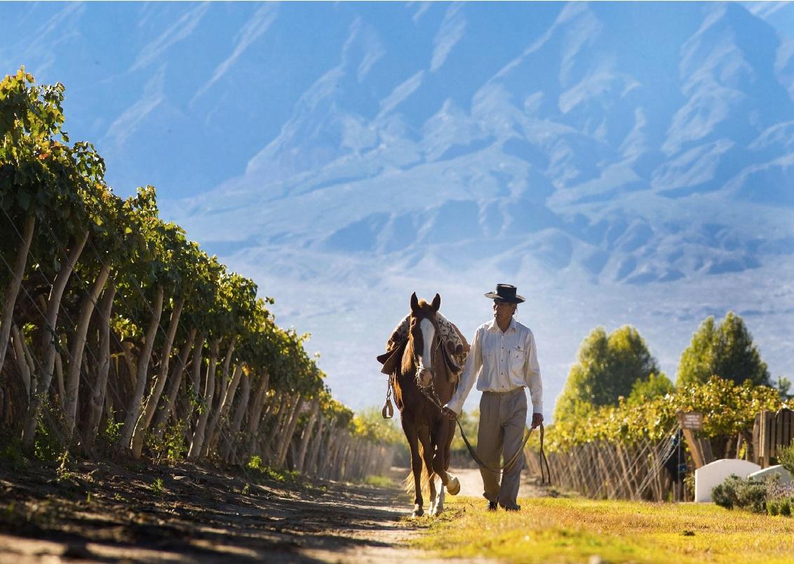 Белое вино за 500 рублей: какие страны предлагают достойные варианты