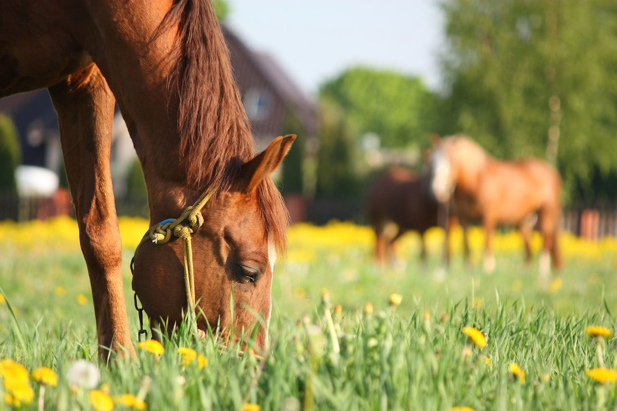День Еремея Распрягальника 13 июня 2019 года: почему нельзя запрягать лошадей