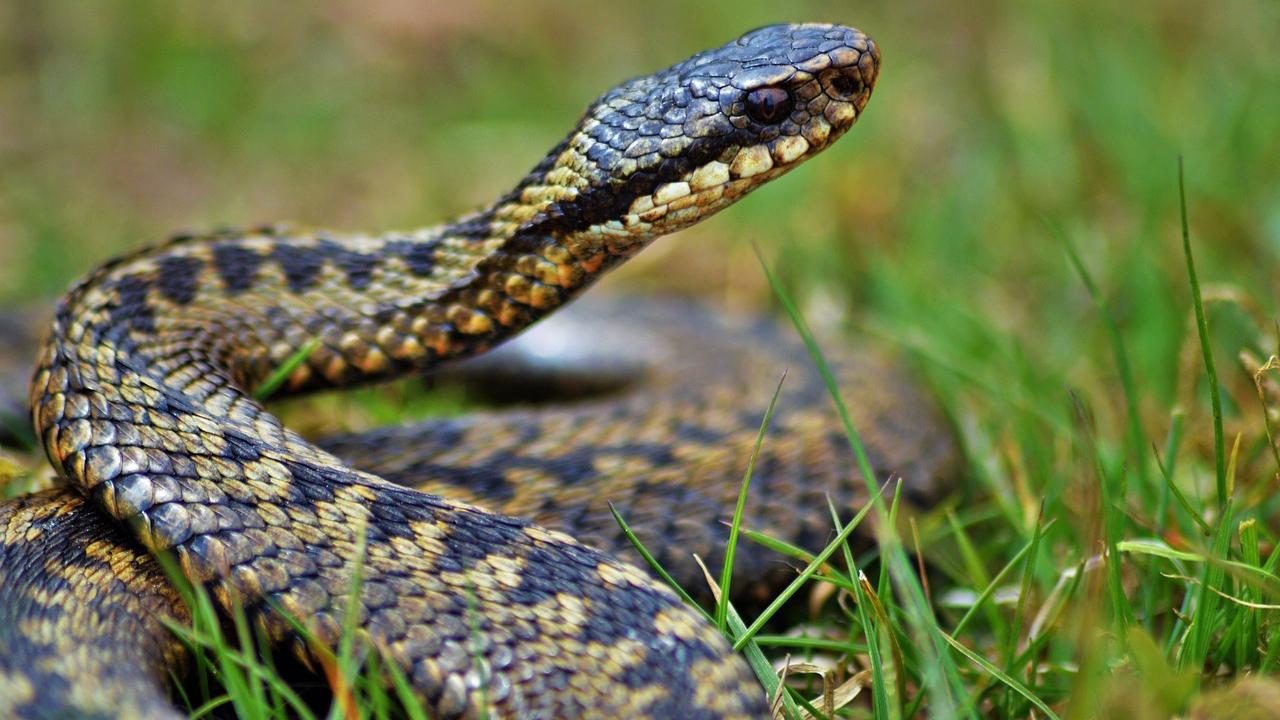 Змеиный праздник 12 июня 2019 года: как избежать укуса гадюки в этот день