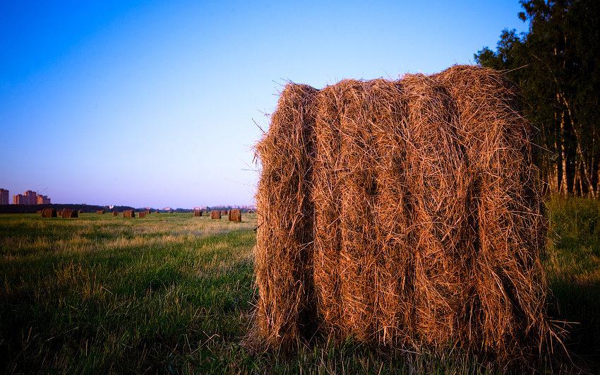 Гаврилов день 26 июля: зачем украшали сноп сена лентами и несли в дом
