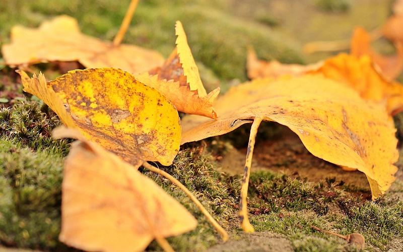 Традиции и приметы на 6 сентября – как опавшие листья помогут привлечь удачу в день Евтихия Тихого