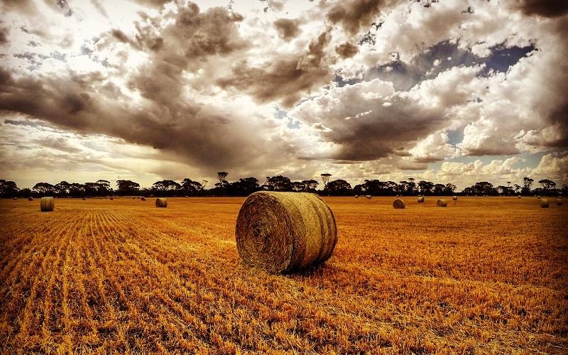 18 августа – какую погоду в декабре сулит день Евстигнея Житника