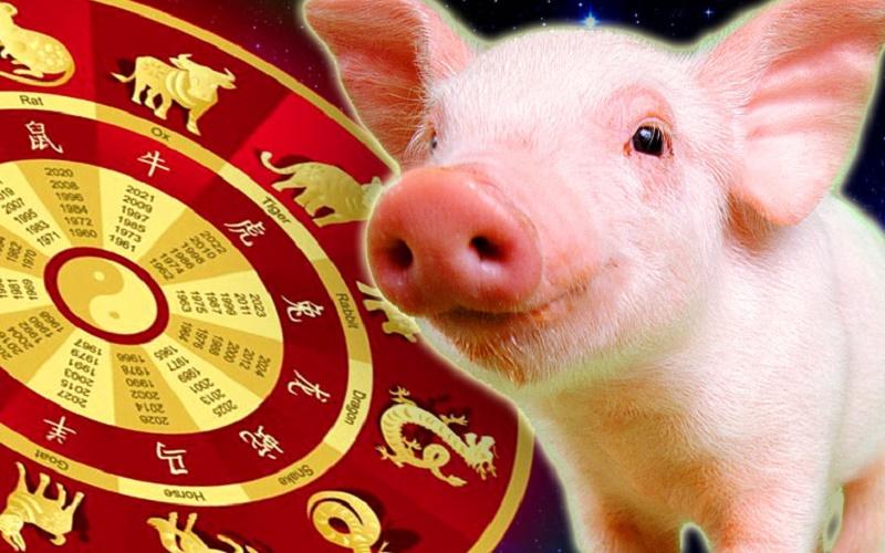 Не напивайтесь в год Свиньи — восточный гороскоп и алкоголь