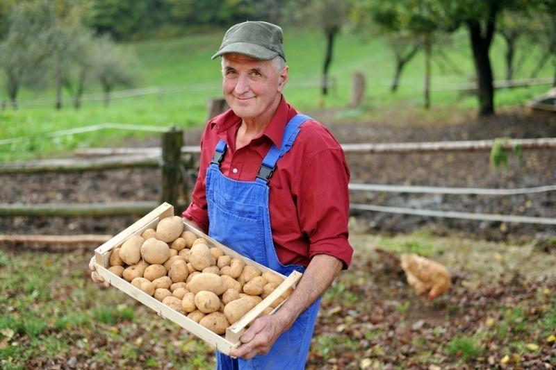 Традиции Ермолаева дня 8 августа: что важно сделать сегодня огороде