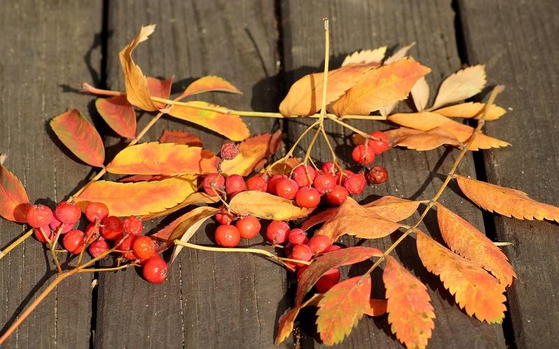 Традиции и приметы на 9 сентября – какую погоду на осень и зиму в день Двух Пименов пророчит рябина