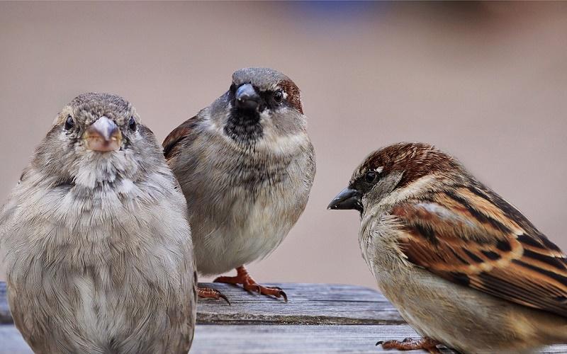 Приметы на 7 сентября – как по поведению птиц узнать погоду на ближайшие дни в праздник Тита Листопадника