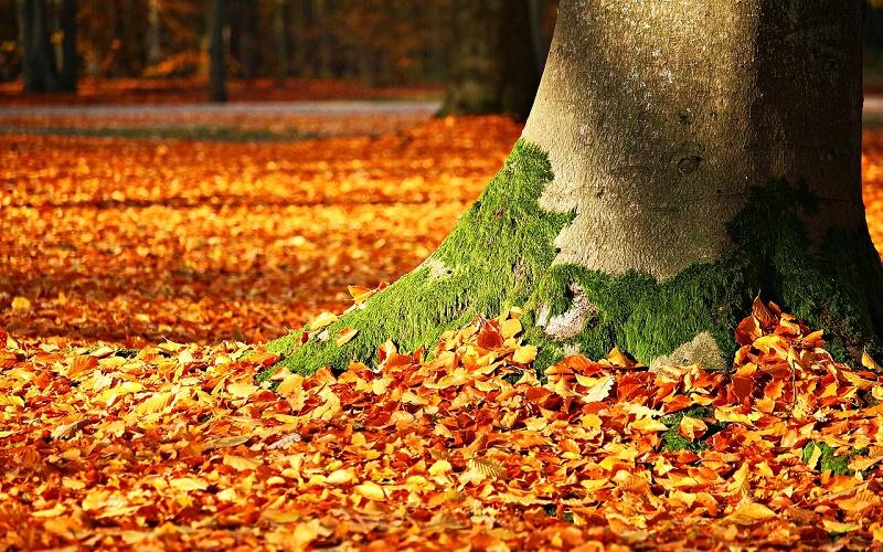 Традиции и приметы на 25 сентября – как по листве узнать погоду на зиму в день Артамона Змеевика
